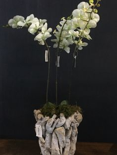 Floral, Plants, Artificial Flowers, Florals, Planters, Flower, Plant, Planting, Flowers