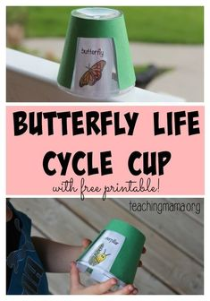Butterfly Life Cycle Cup Activity for Preschool and Kindergarten with Free Printable!