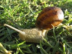 Snail on Grass Snail, Free Stock Photos, Grass, Objects, Animals, Animales, Animaux, Grasses, Animal