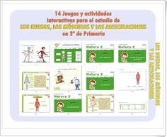 LOS HUESOS, LOS MÚSCULOS Y LAS ARTICULACIONES: 14 Juegos y actividades interactivas de 2º de Primaria Science Experiments, Map, Editorial, Body Bones, Learning Multiplication Tables, Science Area, Location Map, Science Inquiry, Maps