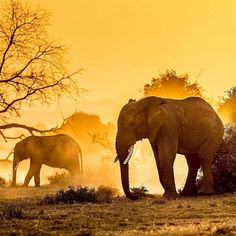 New post on funnywildlife Dumbo The Elephant, Happy Elephant, Elephant Love, Elephant Art, Elephant Gifts, Elephant Images, King Of The World, World Images, Warm Autumn