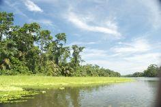 Fotografía: Destinos Reps - Canales Moín - Lirios en los canales (Costa Rica) Rafting, Costa Rica, River, Outdoor, Whales, Irises, Volcanoes, Destinations, Woods