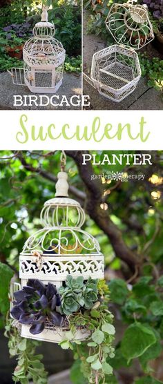 Birdcage Succulent Planter DIY Project
