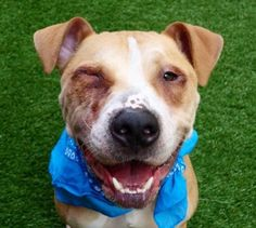 JAZZ - A1110404 - - Manhattan  TO BE DESTROYED 05/06/17 **ON PUBLIC LIST** A volunteer writes: Not much is known about Jazz except that he was owned since tender puppyhood and that his master did not have time for him anymore…We now have to make sure that this young man gets the care and the love he deserves…Jazz is so worth your and our attention. He is quite endearing. He is a very hungry caterpillar as he has so much weight to catch up with. He will search wi