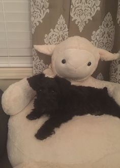 New lamb chair for my 4 legged baby Lilly Mae