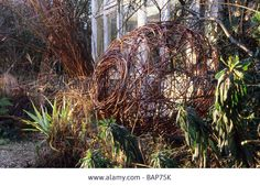 Sticky Wicket Dorset winter with woven willow sculpture by Pam Lewis January natural materials December garden Stock Photo