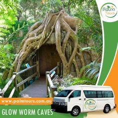 Mount Tamborine: Waterfalls, Wine tasting and Glow Worm Cave Tour - $79 Only  Start planning your trip today, call us on 0499077053 or visit our website at www.palmtours.com.au to book your tour. You may also book at https://www.facebook.com/PalmToursAustralia/app_206826929430792.  #palmtours #mounttamborine #hinterland #glowwormcave #glowworm #mttamborine #travel #traveltours #brisbane
