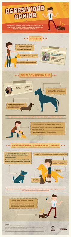 Si tu perro ladra sin motivo y gruñe mostrando su dentadura, probablemente padece de agresividad canina, pero tú puedes evitarlo. http://institutoperro.com/?p=3170