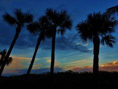 Blue Sky Palms by Matthew-Beziat.deviantart.com on @DeviantArt