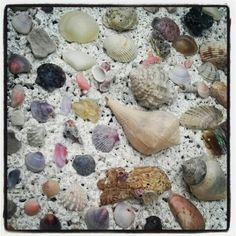 She sells seashells by the seashore. Hand selected by ALLEY OOP VINTAGE on Anna Maria Island, Florida.