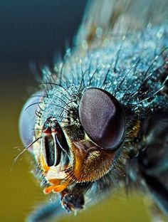 """God in his wisdom made the fly/ and then forgot to tell us why."" -- Ogden Nash"