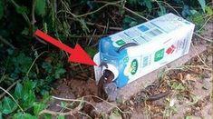 Geniální trik jak se zbavit slimáku na zahrádce! Zachraňte Vaší úrodu!   Vychytávkov
