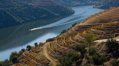 Douro Valley in Porto: a tip by BBC for wine- and port-lovers.