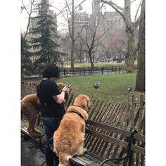 http://washingtonsquareparkerz.com/gigimasria-squirrelhunt-washingtonsquarepark-nyc/   @gigimasria #squirrelhunt #washingtonsquarepark #nyc