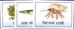 Ocean & Sea Life Primary Teaching Resources and Printables - SparkleBox @ http://www.sparklebox.co.uk/blue/topic/living/ocean-life.html#