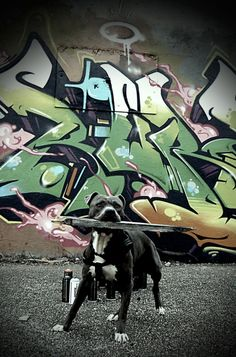 Graffiti art lol bad ass art and dog