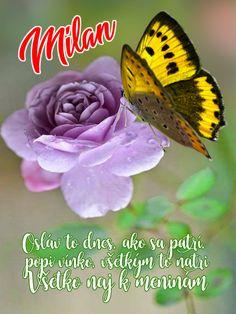 Osláv to dnes, ako sa patrí, popi vínko, všetkým to natri Všetko naj k meninám Milan, November, Animals, November Born, Animales, Animaux, Animal, Animais