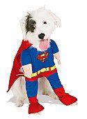 Superdog :) #hunde #dogsplaces