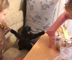 El nemesis del suéter | Las 100 fotos más importantes de los gatos de todos los tiempos