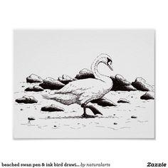 beached swan pen & ink bird drawing poster