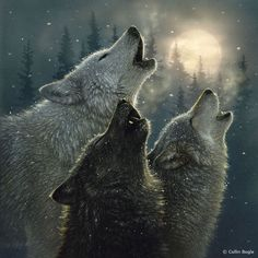 Wildlife Art Prints by Artist Collin Bogle #wolves