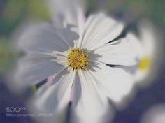 by evdokya. Please Like http://fb.me/go4photos and Follow @go4fotos Thank You. :-)