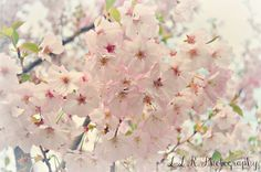 Nature blossoms
