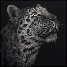 Scratchboard of a leopard by Christina Penescu