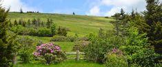 TN:  Roan Mountain State Park, Tenn.  Roan-mountain spring1x