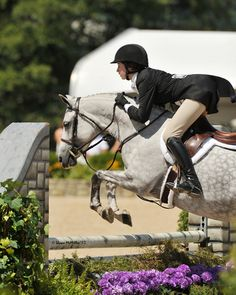 Hillford Smoke and Mirrors - Welsh Pony - Hunter for sale on Bigeq.com