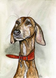 How cute is this? {A Little Articulate Azawakh Hound Dog Print 5 by AlmostAnAngel66,}