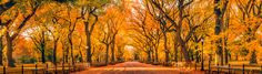 "Autumn in Central Park - This iconic walkway of Central Park, formally known as ""The Mall"", has become one of my favorite spots to shoot here in NYC. Rather than attempting to capture this scene in a single frame, I decided to attempt my first large panoramic photo.    The image is made up of 7 vertical images shot with the Canon 50mm f/1.8 II which I then stitched together to create the photo.  Full resolution image is 12101 × 3455.  I hope you enjoy it!  Thank you for all your faves…"