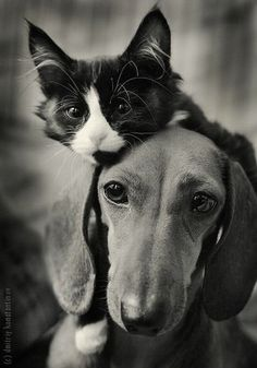 Love one another....cat & dog