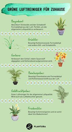 Luftreinigende Pflanzen: Die Top 10 – Plantura Green air purifiers for home: If you can't buy an expensive air purifier, you don't have to do without fresh air. These plants declare war on pollutants in the air. Air Cleaning Plants, Air Plants, Indoor Plants, Indoor Garden, Outdoor Gardens, Home And Garden, Yucca Plant, Decor Inspiration, Succulent Care