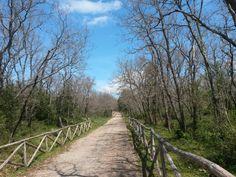 Percorso nel bosco di Sant'Antuono