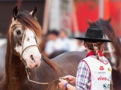 Cavalo Crioulo Expointer 2013