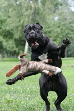 I'll save you! #funny #funnydogs #lol #laugh
