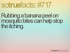 Rubbing a banana peel on mosquito bites can help stop the itching.