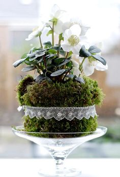 Poinsettia with moss all around- Julstjärna med mossa runtom Poinsettia with moss all around - Christmas Flowers, Christmas Decorations To Make, Flower Decorations, Christmas Ideas, Deco Floral, Arte Floral, Floral Design, Spring Bulbs, Spring Flowers