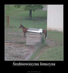 Średniowieczna limuzyna – Wtf Funny, Funny Memes, Hilarious, Love Memes, Best Memes, Polish Memes, Past Tens, All The Things Meme, Horse Riding