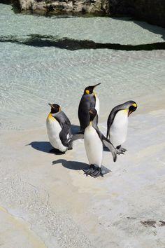 葛西臨海水族園-ペンギン