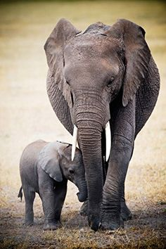 (24x36) Elephant and Baby Art Print Poster