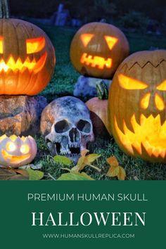 Premium skull for party Skull Decor, Human Skull, Halloween Skull, Pumpkin Carving, Party, Pumpkin Carvings, Parties