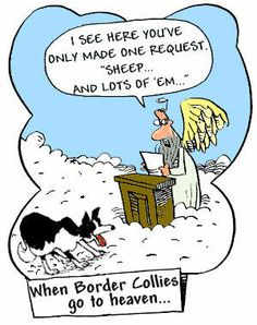 When Border Collies Go To Heaven