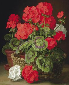 Things of beauty I like to see Gerald A. Cooper (1898-1975) - Geraniums, oil on panel, 50,8 x 42,5 cm. 1955.