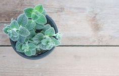 Φτιάξε το πιο τέλειο νερό για να στεγνώσεις, για αδυνάτισμα, για χοληστερίνη, ζάχαρο και κατάθλιψη!   Μυστικά ομορφιάς   mystikaomorfias.gr Fruits And Veggies, Succulents, Seeds, Plants, Tips, Blog, Fruits And Vegetables, Succulent Plants, Blogging
