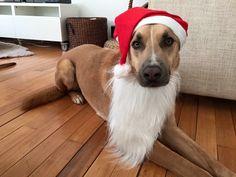 Txarrua Mascotas os desea una Feliz Navidad