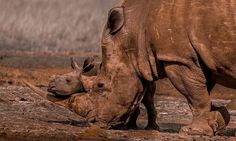 A tender moment between a baby rhino and its mother in South Africa by Jose Fragozo Photography