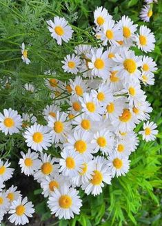 Flowers Gif, Exotic Flowers, Tropical Flowers, Wild Flowers, Beautiful Flowers Images, Flower Images, Pretty Flowers, Daisy Love, Peonies Bouquet