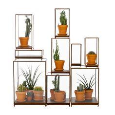 upgrade your cactus